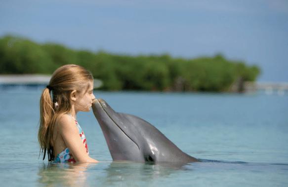 Девочка и дельфин Э.Артемьев (плюс, минус, слова)