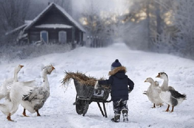 К бабушке в деревню