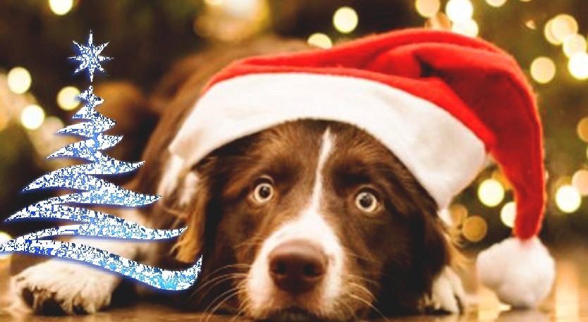 Новогодняя сказка к году собаки 2018