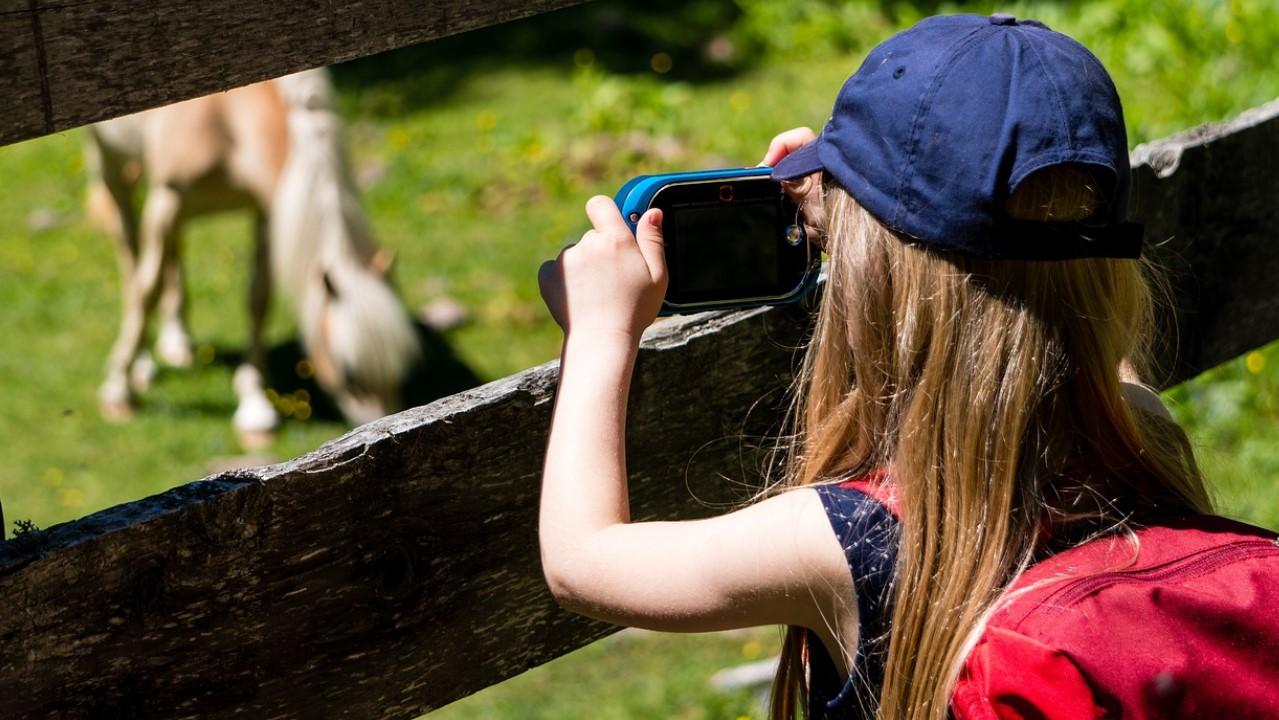 Любопытство и обучение